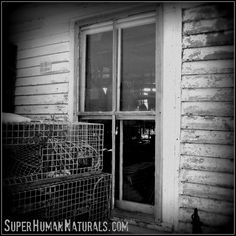 4-12-2014 TrapShack   by SuperHuman Naturals