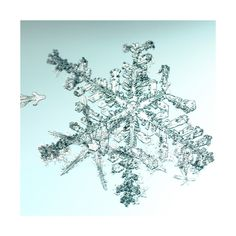 alleverythingthatisyou sno6_034.1, by  Mike + Doug Starn - 20x200 (from $60)