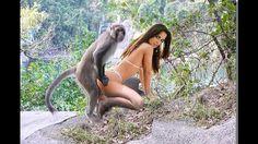 Monkey Vs Hot Girl - friends - bad monkey, hot girls and phoebe saves th...