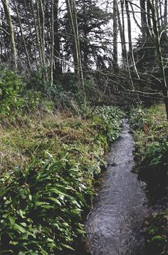 New Beginnings 66 Country Charm, Country Life, Country Roads, Rain Gif, Cinemagraph, Terra, Waterfalls, Landscaping, Wordpress
