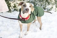 Winter Is Here! Protect Your Pets This Season With These Tips