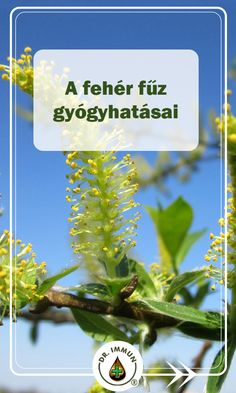 The Cure, Herbs, Lawn And Garden, Herb, Medicinal Plants