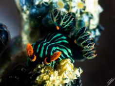 Taken during a scuba dive in Nudi Falls, Indonesia by 遲來的青鳥