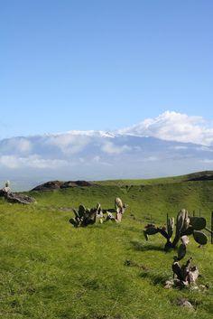 Kohala Ridge Rd. Mauna Kea in the background