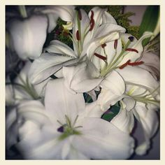 White and pure lilies!