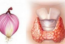 Onion is a well known to be a skin cleaner, bacteria killer, and blood purifier.Another way onion can be helpful is in the case of a disturbed thyroid.Igor Knjazkin, a doctor from Sant Petersburg, wrote a Thyroid Disease Symptoms, Thyroid Issues, Thyroid Gland, Thyroid Problems, Hypothyroidism, Thyroid Cancer, Red Onion Recipes, Vitamins And Minerals, Health Remedies