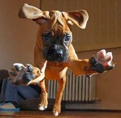 Top 5 Family Friendly Dog Breeds, sweet dogs :)