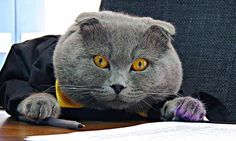 Romanian company hires a CAT as its communications director