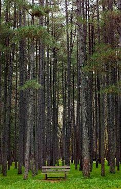 magnificent trees.. Vιtina (Mountainous Arcadia), Greece | Flickr - Nasos Efstathiadis Photography