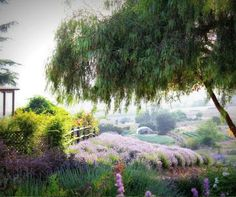 Keys Creek Lavender Farm near Valley Center, Greater San Diego region