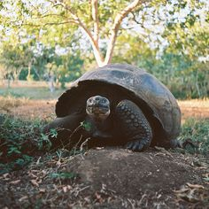 My name is Kaitlyn and I'm a Galapagos and Ecuador trip specialist here at SE. I'm taking over this weekend to share some of my favorite moments in Latin America. Stay tuned! ..Starting today off with some of the most famous inhabitants of the Galapagos.