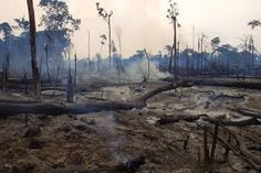 Brazilian rainforest destroyed