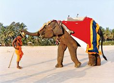 The 185 guest rooms at the Leela Kempinski front one of South Goa's prettiest beaches—and the occasional elephant.