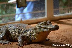 Aligator. Santa Cruz de la sierra. Bolivia.