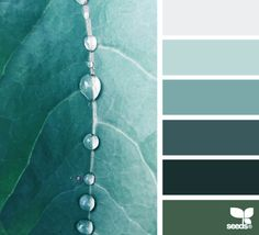 Color Dew - http://design-seeds.com/home/entry/color-dew6