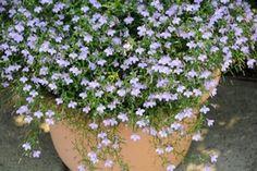 Best Perennials For Shade - Garden Design Ideas - Gardening Best Perennials For Shade, Best Plants For Shade, Shade Annuals, Purple Plants, Sun Plants, Foliage Plants, Shade Plants, Garden Plants, Small Yellow Flowers