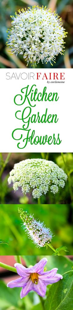 Beauty is all over, including the flowers of the onion, carrots, eggplants and zucchini, among other plants we can grow in a kitchen garden. Click to see the beautiful flowers a kitchen garden can produce. via @enrilemoine