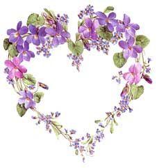 coeur de violettes