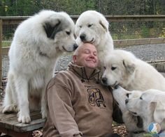 I don't know who this is, but I'd sure love to trade places with him and be in the middle of all those Pyrs <3