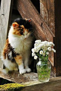 beautiful cat and flowers