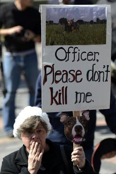 """Newspapers littered with stories of police officers shooting innocent dogs have outraged many dog lovers, but now there is reason to rejoice:  a Colorado senate committee has unanimously passed a bill that aims to limit these kinds of tragedies.  Senate bill 226, dubbed the """"Don't Shoot My Dog"""" bill, will require police and sheriff departments to provide online training courses for officers and deputies so they can learn to understand dog behaviors and recognize body language.  Read…"""