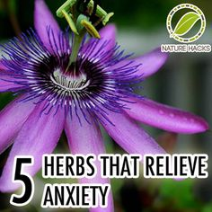 """Please Share This Page: 5 Herbs That Relieve Anxiety – Image To Repin / ShareImage – Naturehacks.com (with permission) Anxiety seems to be one of the more prevalent conditions of the modern world. It's not surprising – life is more fast paced and there is simply """"more stuff happening"""" than there used to be. We [...]"""