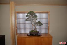 El Tim Bonsai: TIM IN JAPAN Kokufu, día 4. SUZUKI 1