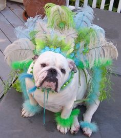PetsLady's Pick: Cute Mardi Gras Bulldog Of The Day ... see more at PetsLady.com ... The FUN site for Animal Lovers