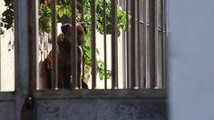 """Trailer del documental """"El Albergue"""""""