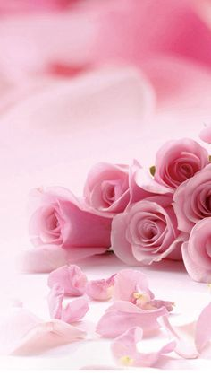 Pink Roses Valentines Day Wallpaper HD for Mobile Android iPhone