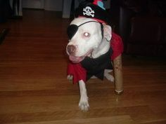 Check out my entry in Milk Bone's Halloween Pet Costume Contest. #HalloWOOF cross your fingers that my amputee, heart worm survivor, recused sweetheart wins in her homemade costume. Phoenix the peg leg pirate :)