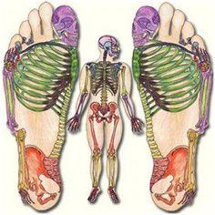 I remember noticing the big sign on Paseo de Montejo for UK Massage Reflexology… Reflexology Massage, Foot Massage, Lymph Massage, Acupuncture Benefits, Massage Benefits, Illustrations Médicales, Les Chakras, Reiki Meditation, Massage Therapy