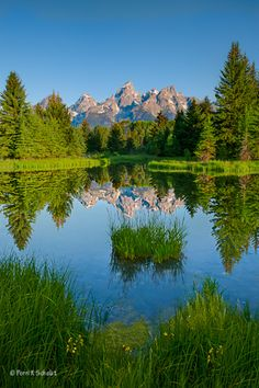 In honor of Earth Day admission to our National Parks is free all this week. (Photo of The Beaver Pond, Teton National Park, Grand Teton National Park, National Parks, Beautiful World, Beautiful Places, Beautiful Pictures, Landscape Photography, Nature Photography, Nature Landscape, Water Reflections