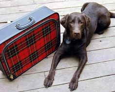 Vintage Luggage Red Plaid Suitcase Soft Sided by CalloohCallay, $35.00