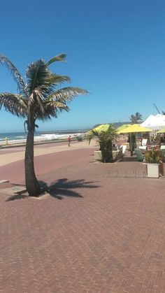 Sunny Durban South Africa Durban South Africa, Hibiscus, Coast, African, Traditional, Beach, Places, Water, Lugares