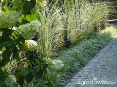 Ogrodowy powrót do dzieciństwa. - strona 1016 - Forum ogrodnicze - Ogrodowisko