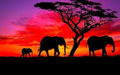 Elephants at Sunset!
