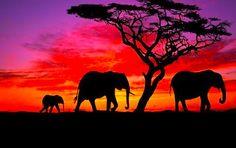 elephant family walks into the sunset... beautiful