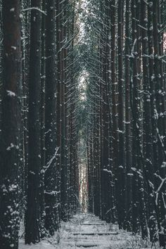 the cold woods by Denny Bitte<br/> -Walking the cold woods by Denny Bitte<br/> - Driving past the misty forest early in the morning in Hossegor, South West France. wallpapers for iPhone 6 SE & iPhone 6 plus Lava, Misty Forest, Pink Sky, Winter Scenes, Nature Pictures, Beautiful Pictures, Paths, Nature Photography, Walking