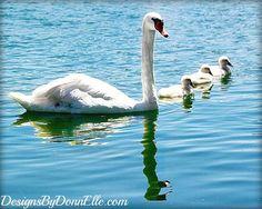 Swan & Babies Fuzzy White Nusery Art Fine Art by DesignsByDonnElle