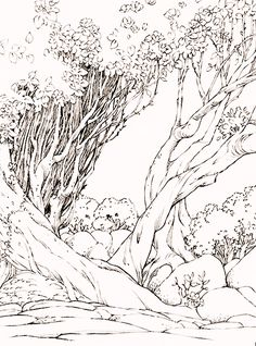 """Hiramatsu created the YOI Midsummer Night's Dream artwork by drawing 4 separate pieces (Victor, Yuuri, Yurio, the background)"""" Pencil Art Drawings, Realistic Drawings, Easy Drawings, Scenery Drawing Pencil, Landscape Drawings, Landscape Art, Forest Sketch, Sketch Background, Composition Painting"""