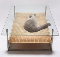cat hammock coffee table - i think molson would have liked this