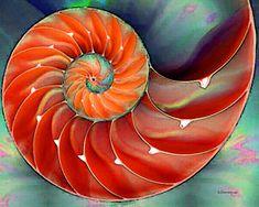Nautilus Paintings for Sale - Fine Art America
