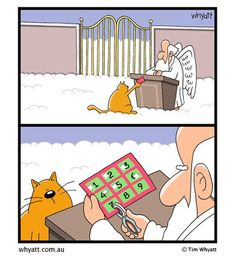 Les chats ont 9 vies