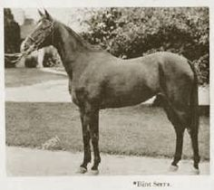 *Bint Serra (Sotamm, by *Astraled x Serra, by Sahab) -  photo from  The Royal Arabians of Egypt and the Stud of Henry Babson