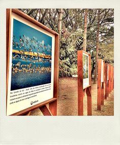 Exposição Fotografia - Parque Ibirapuera