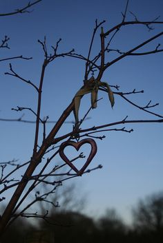 Tree amulet at arboretum by ruthsinger, via Flickr