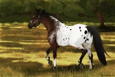 Appaloosa by Plaguedog.deviantart.com on @DeviantArt
