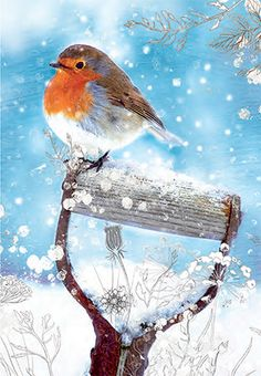 Buy Woodmansterne Garden Companion Charity Christmas Cards, Box of 5 from our Christmas Cards range at John Lewis & Partners. Painted Christmas Cards, Watercolor Christmas Cards, Christmas Bird, Christmas Scenes, Watercolor Bird, Watercolor Paintings, Charity Christmas Cards, Bird Artwork, Bird Pictures