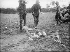 THE AUSTRALIAN IMPERIAL FORCE ON THE WESTERN FRONT, 1916-1918